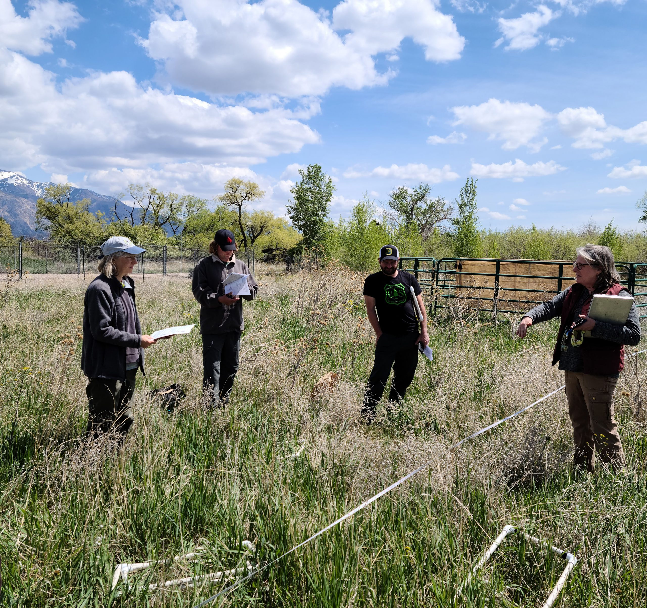 tour group observes yellow starthistle insectary